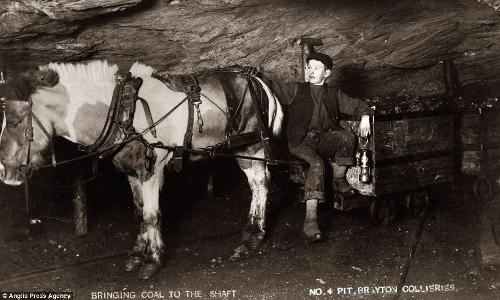 Kucyki pracujące w kopalniach