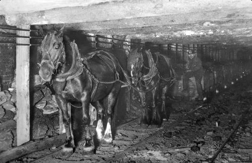 Kucyki w kopalniach