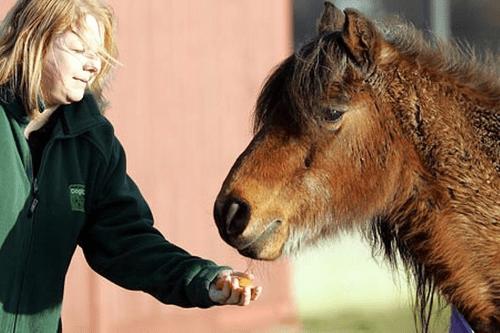 Najdłużej żyjący Pit Pony - Tony