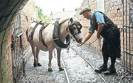 Najdłużej pracujący Pit Pony.