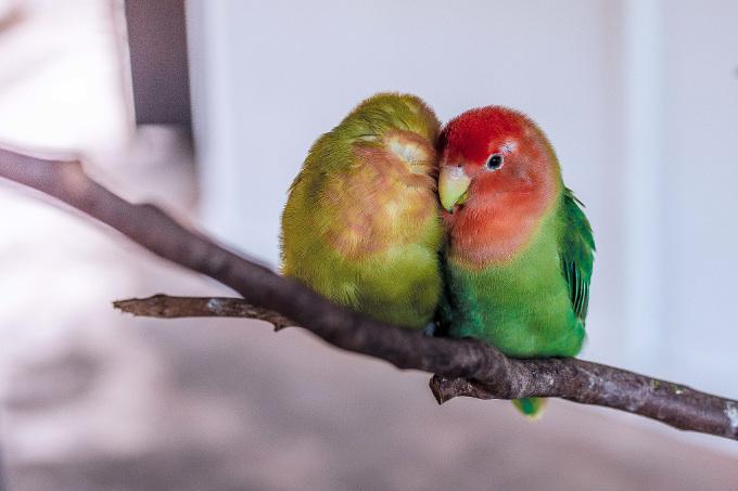 Noworoczne postanowienia - nowa miłość