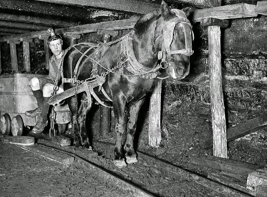 Pit Pony w kopalni