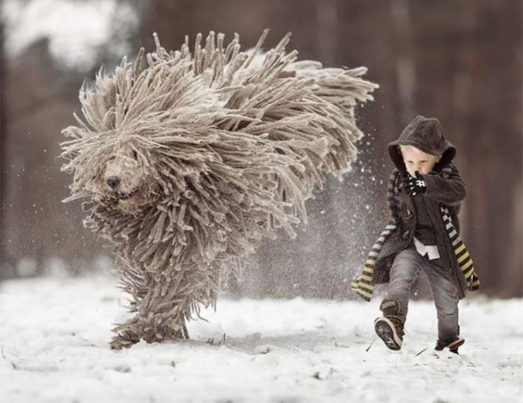 Małe dzieci i wielkie psy