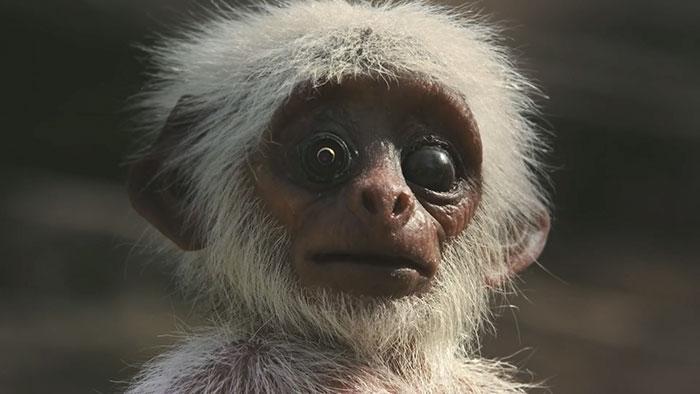 monkeys-mourn-dead-robot-spy-in-the-wild-7