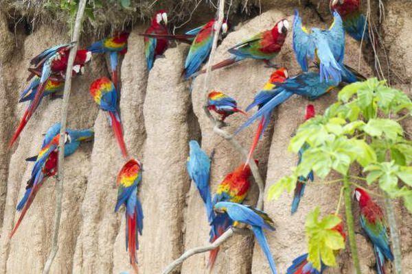 lizawka dla papug