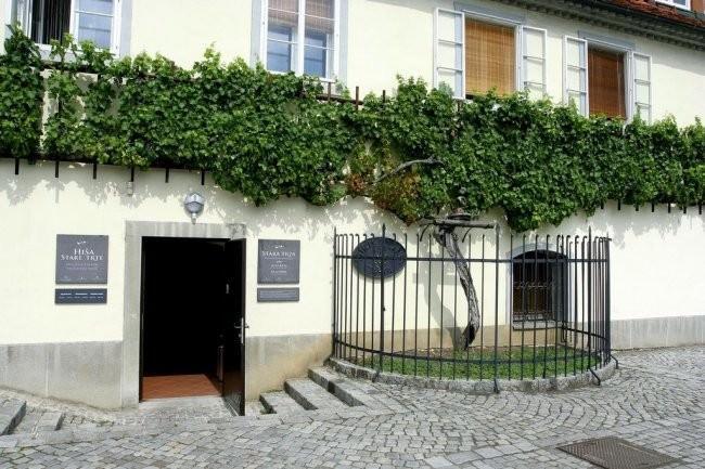 Dom Starego Pnącza
