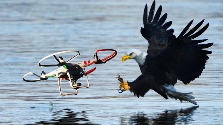 Orły walczą z dronami