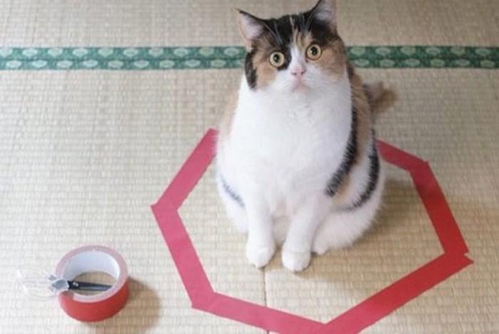 cat-circle-trick-696x362-620x415