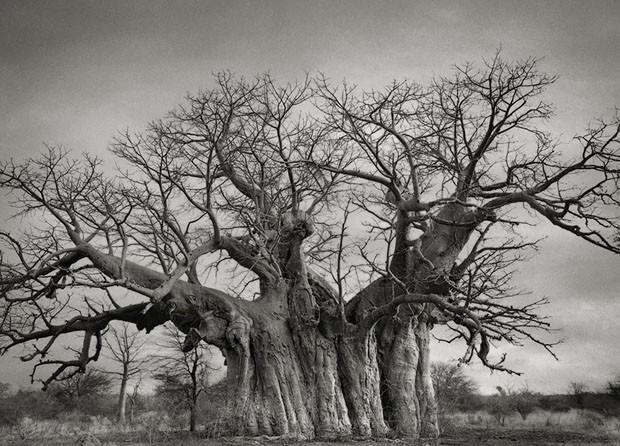 Beth Moon - zdjęcia najstarszych drzew świata