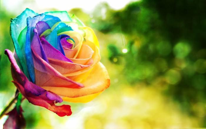 Kolor kwiatów znaczenie