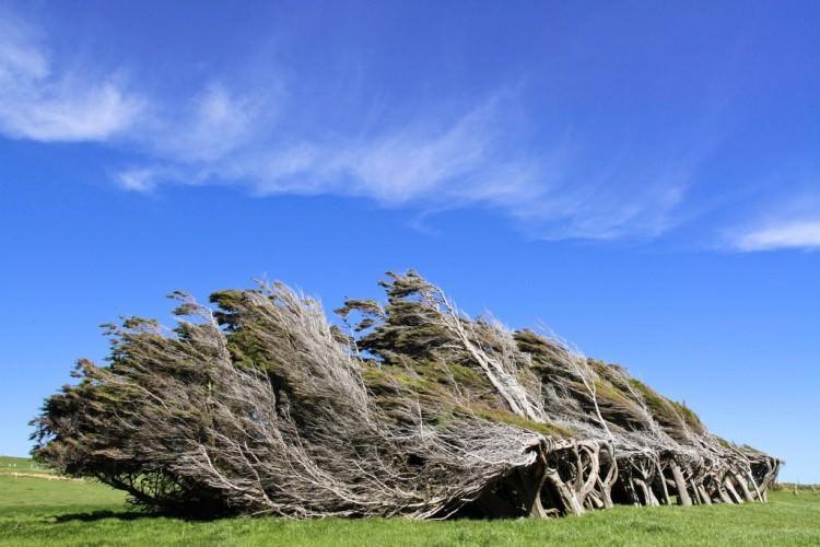 Niezwykłe drzewa - Slope Point Nowa Zelandia