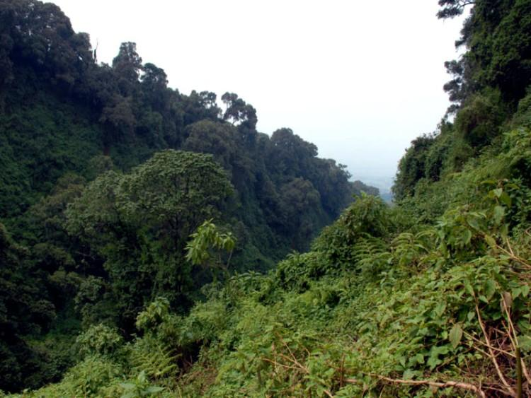 dżungla