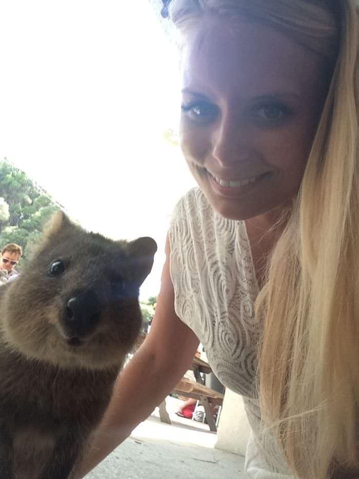 selfie z Quokką