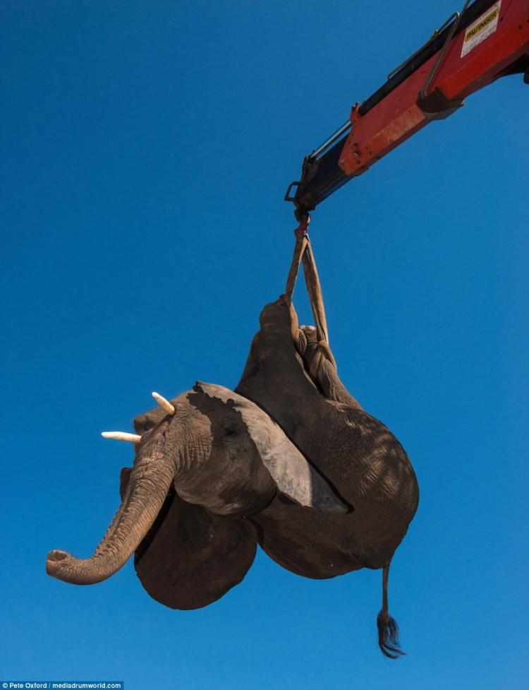 ratowanie słoni