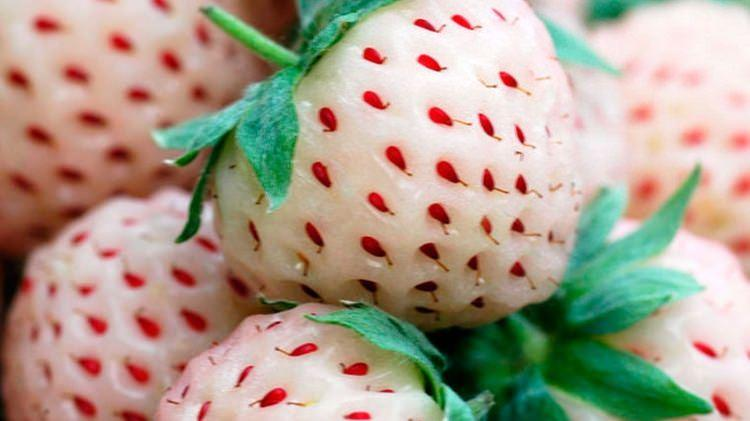 Biała truskawka ananasowa - pineberry