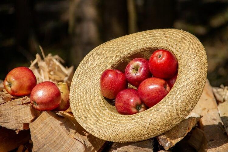 jabłko zdrowie
