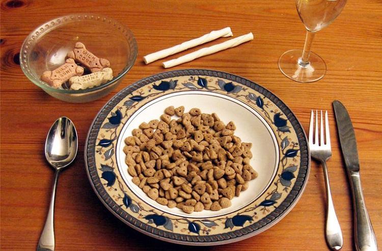Degustator karmy dla kotów