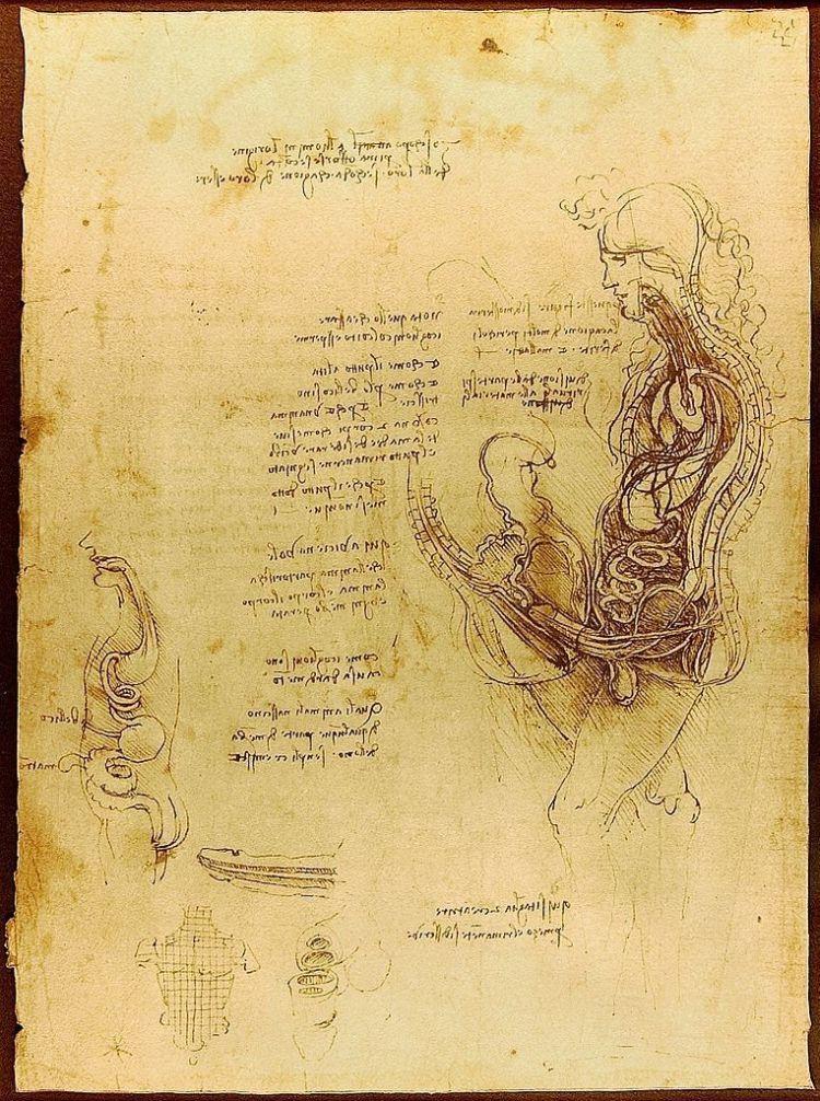 Przekrój kobiety i mężczyzny podczas stosunku, Leonardo da Vinci, około 1492.