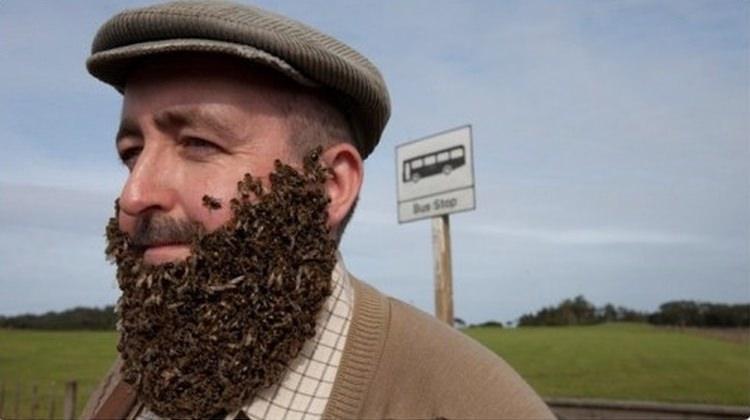 Pszczela broda