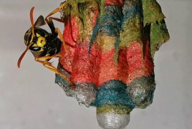 kolorowe gniazda os