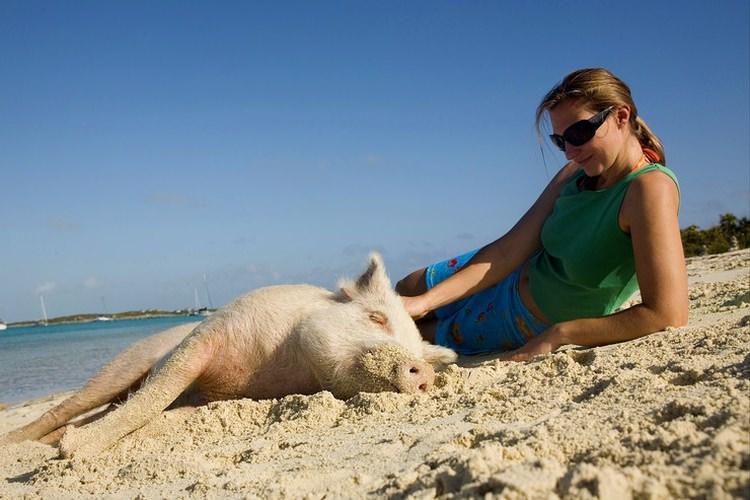 Bahamy - Pig Beach