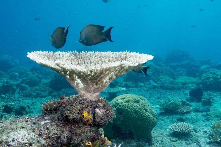 Raja Ampat nurkowanie