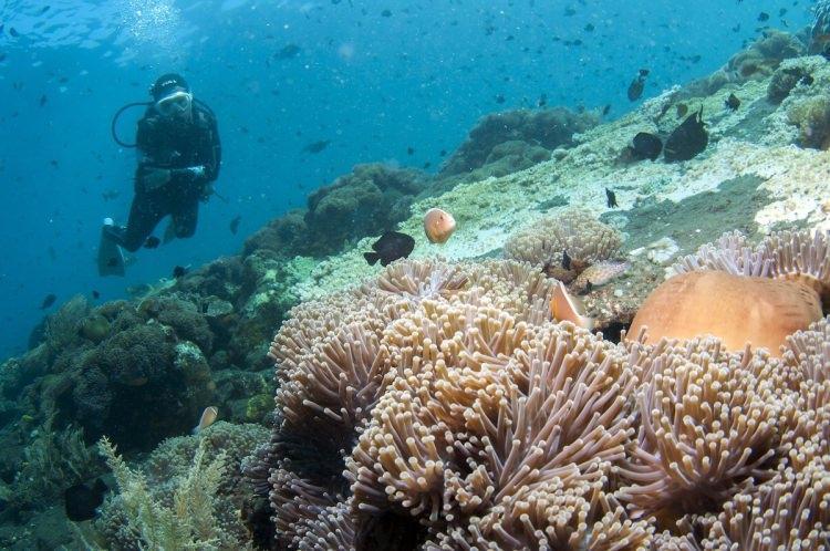 Bali nurkowanie