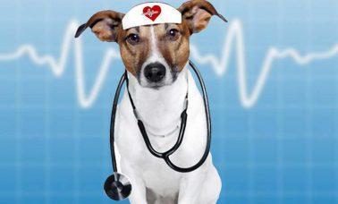 pies i zdrowie czlowieka
