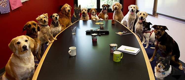 pies i zdrowie czlowieka4
