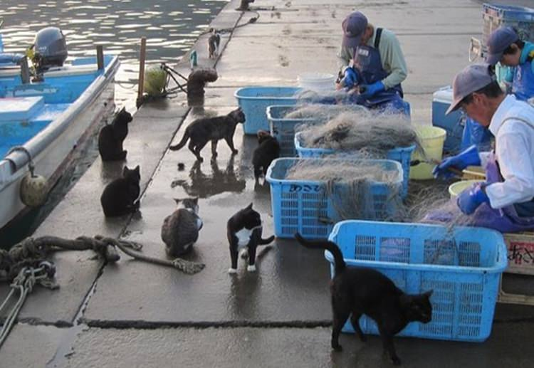 Tashirojima wyspa kotów