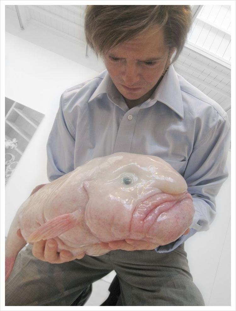 Psychrolutes marcidus aka blobfish