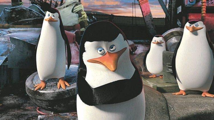 pingwiny ciekawostki