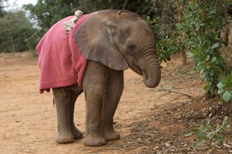 słonie ciekawostki