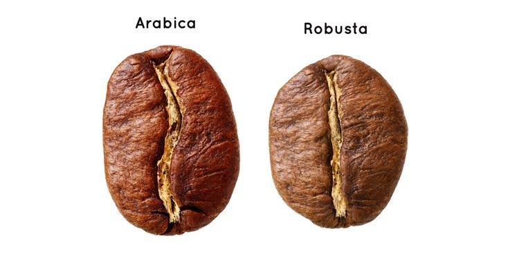 kawa arabica i robusta różnica
