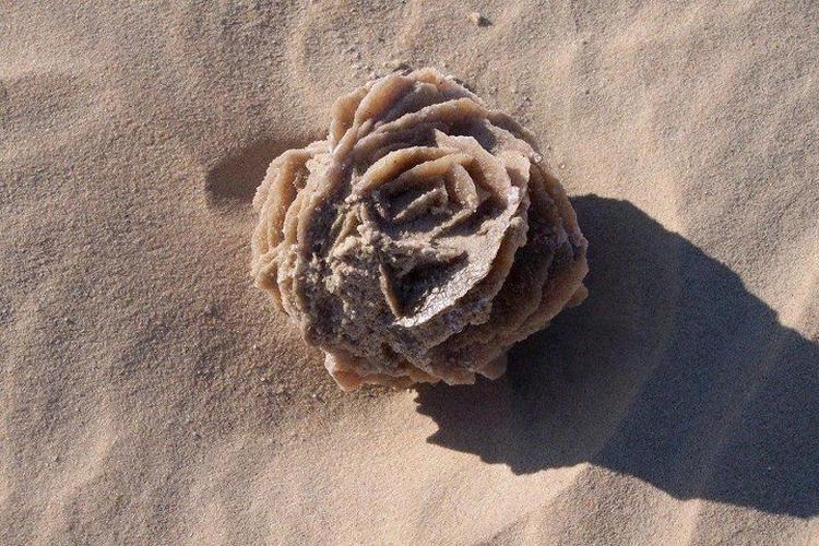 Róża pustyni