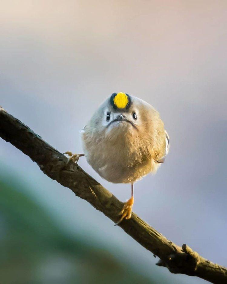 zdjęcia ptaków wyglądających jak z gry Angry Birds