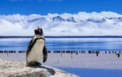 ciekawostki o Antarktydzie
