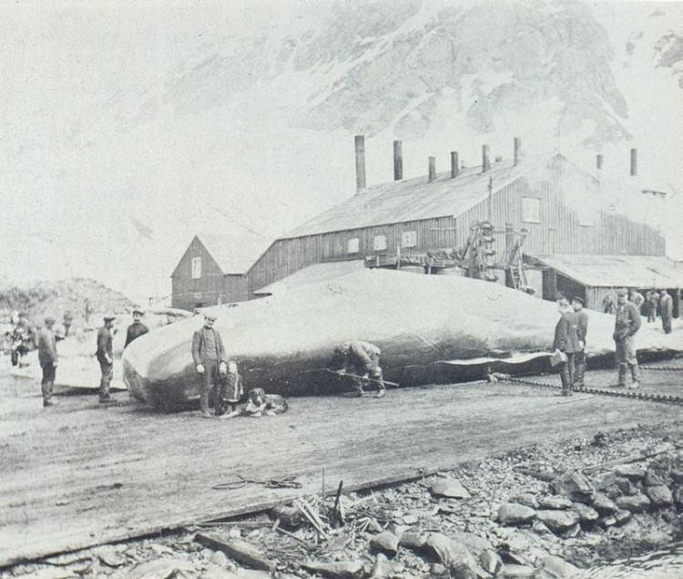 Stacja wielorybnicza Grytviken