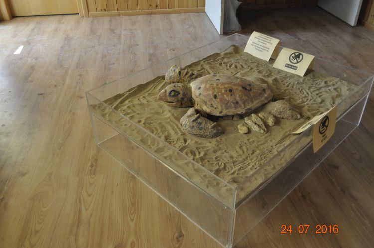 Szpital dla żółwi
