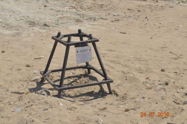 żółwie na Zakynthos