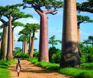 10 najlepszych atrakcji turystycznych na Madagaskarze