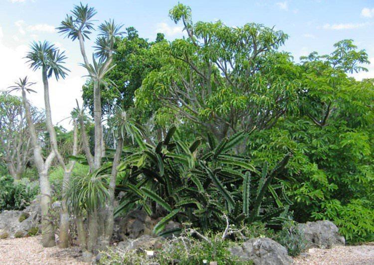 Kolczasty Las, Madagaskar