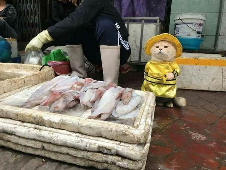 "kto ""Chó"" z Wietnamu"
