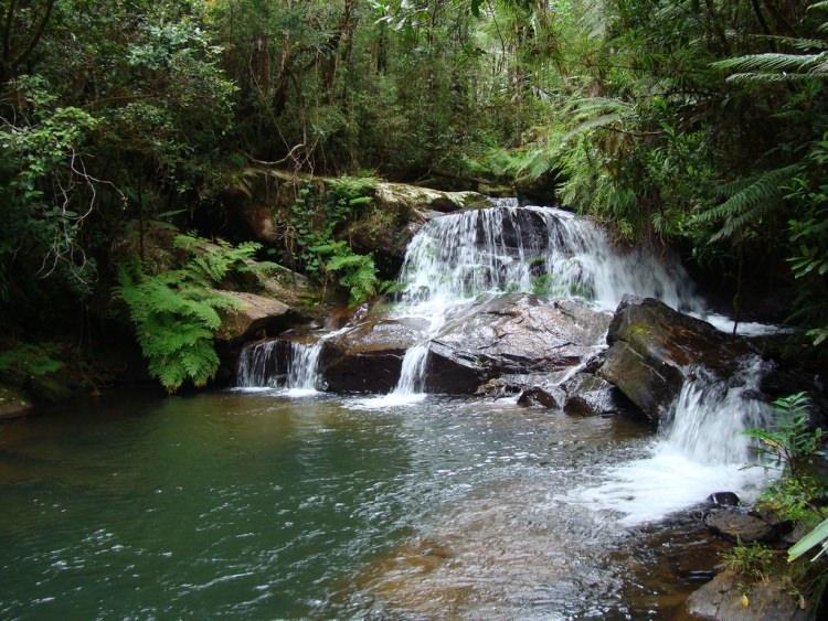 Park Narodowy Andasibe-Mantadia