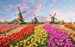 Park Keukenhof - holenderski ogród kwiatowy