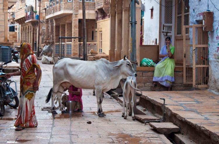 Mleko w Indiach