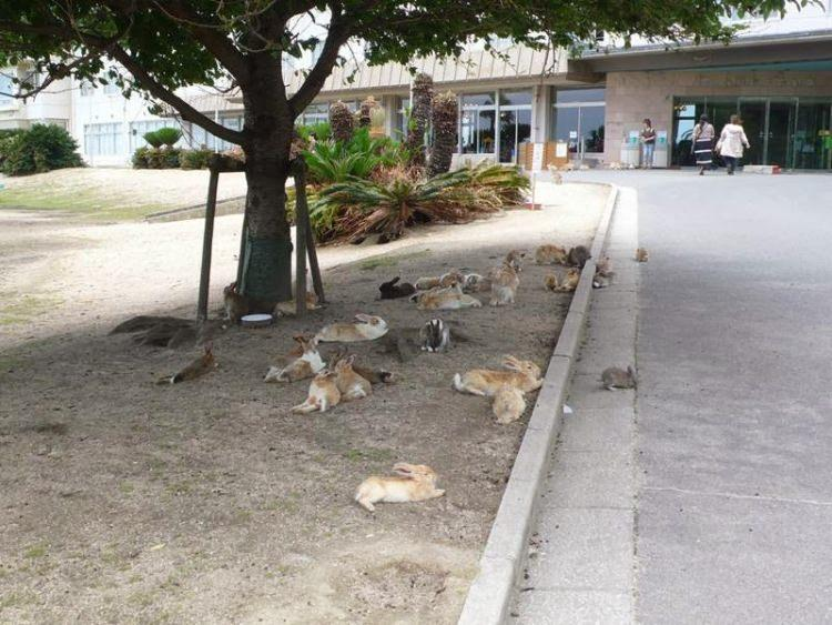 Japońska wyspa królików