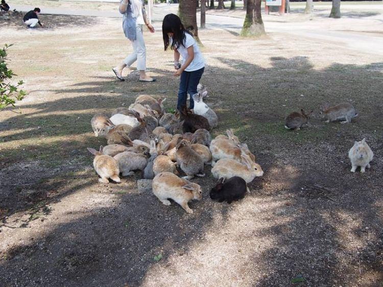 Wyspa zamieszkana przez króliki w Japonii