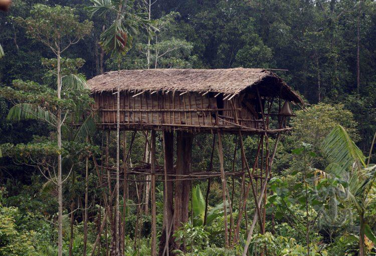 Plemie Korowai żyje w domkach na drzewach