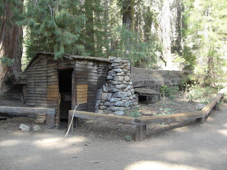 Tharp's Log - powalona sekwoja